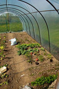 Free Greenhouse Stock Photo - 19335570