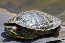 Free Turtle Stock Photos - 19335573