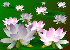 Free Lotus Flowers Stock Image - 19337521