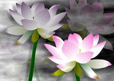 Free Lotus Flowers Stock Images - 19337524