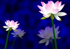 Free Lotus Flowers Royalty Free Stock Image - 19337526