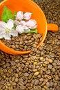 Free Coffee Stock Photography - 19346042