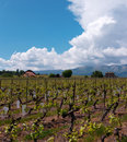 Free Swiss Farms And Vineyards Royalty Free Stock Photo - 19346985