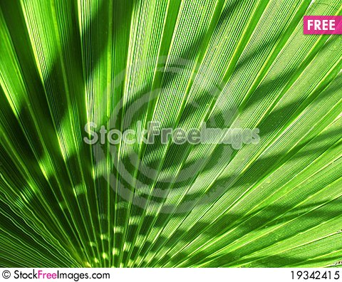 Free Palm Tree Shade Royalty Free Stock Photo - 19342415