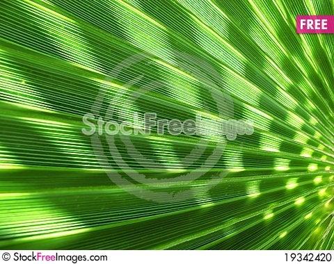 Free Palm Tree Shade Stock Photo - 19342420