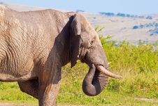 Free Bull Elephant With Wet Body Stock Photo - 19340040