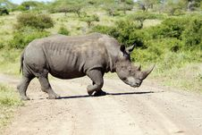 Free White Rhinoceros Crossing The Road Stock Photo - 19340290
