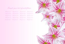 Free Beautiful Pink Flowers Royalty Free Stock Photography - 19340787