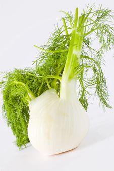 Free Fennel Stock Images - 19341064