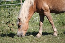 Free Horse And Grass Stock Photos - 19343493