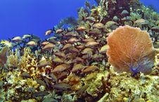 Free School Of Fish And Sea Fan In Cayman Brac Stock Photos - 19345203