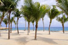 Free Palm Trees On Tropical Beach Royalty Free Stock Photography - 19345407