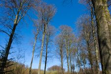 Free Tall Trees Nature Forest Background Royalty Free Stock Images - 19345599