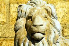 Free Lion Stock Photo - 19346900