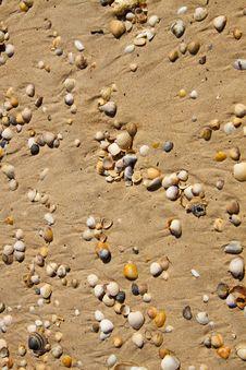 Small Seashells Stock Photos