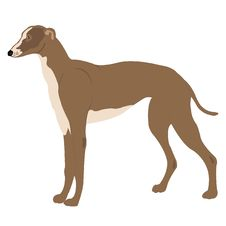 Free Illustration Of The Dog Of The Sort Greyhound Stock Photos - 19348373
