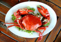 Free Cooked Crabs Royalty Free Stock Image - 19357836