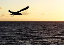 Free A Bird In The Sunset Royalty Free Stock Image - 19350006