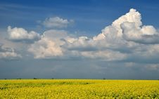Free Yellow Field Royalty Free Stock Image - 19350266
