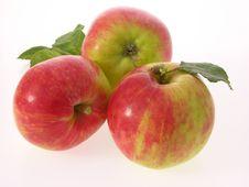 Free Gravensteiner Apples Stock Image - 19352361