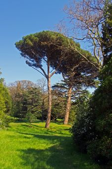 Free Green Tree And Blue Sky Stock Photography - 19353442