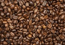 Free Coffee Roasted Beans Royalty Free Stock Photography - 19355607