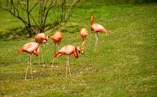 Free Pink Flamingos Stock Photography - 19357972