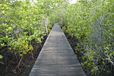 Free Mangrove Path Way Royalty Free Stock Image - 19359486