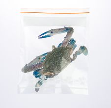 Fresh Crab In The Plastic Zipper Bag Stock Images