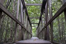 Free Mangrove Path Way Royalty Free Stock Photos - 19359938