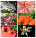 Free Collection Flowers Stock Photos - 19362163