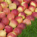 Free Apples Stock Photography - 19363692