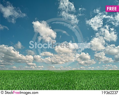 Free Green Meadow Royalty Free Stock Photography - 19362237