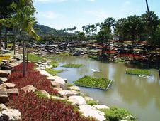 Free Tropical Water Garden Stock Photos - 19361553