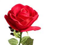 Free Fabric Rose Royalty Free Stock Photo - 19361905