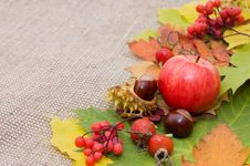 Free Autumn Leaves And Fruits Stock Image - 19362441