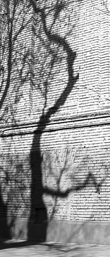 Free The Shadow Of The Tree Stock Images - 19363384