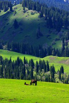 Free Grass Land In Xinjiang Stock Photos - 19364193