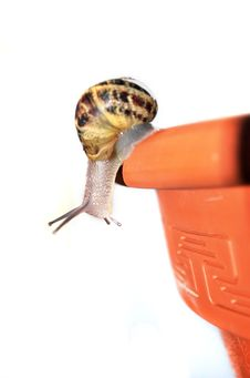 Curious Snail Stock Image