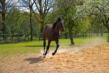 Free Brown Horse In Jump Royalty Free Stock Photography - 19367307