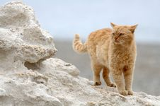 Free Big Cat Stands On The Cliff Royalty Free Stock Image - 19369776