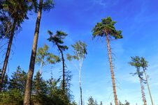 Free Trees And Sky Stock Photography - 193619232