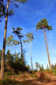 Free Trees And Sky Royalty Free Stock Photos - 193619238