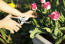 Free Woman Gardening Royalty Free Stock Images - 19370159