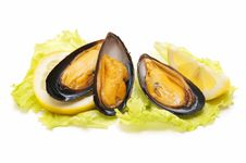 Free Mussels Stock Photo - 19370370