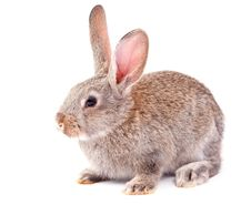 Free Rabbit Royalty Free Stock Photography - 19371547