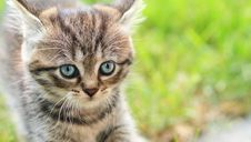 Free Young Cat Stock Images - 19372554