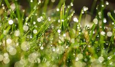 Free Green Grass Stock Photography - 19372572
