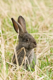 Free Rabbit Stock Photo - 19372760