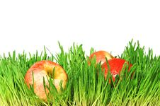 Free Red Apples In Royalty Free Stock Images - 19372869